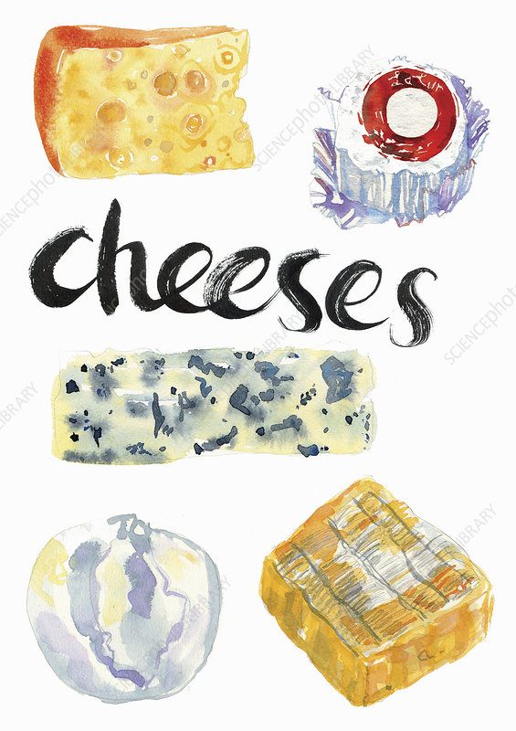 Different cheeses, illustration