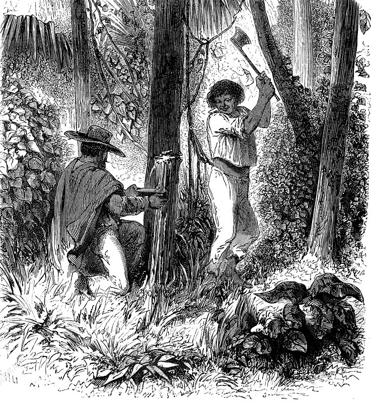 Rubber industry in the Amazon, 19th century