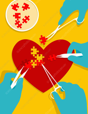 Stem cells mending heart, conceptual illustration