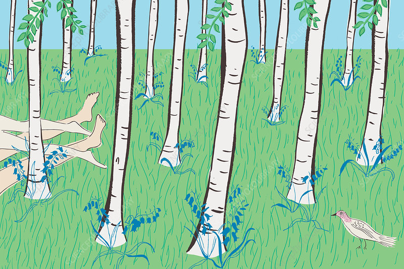 Bare legs of couple lying in bluebell woods, illustration