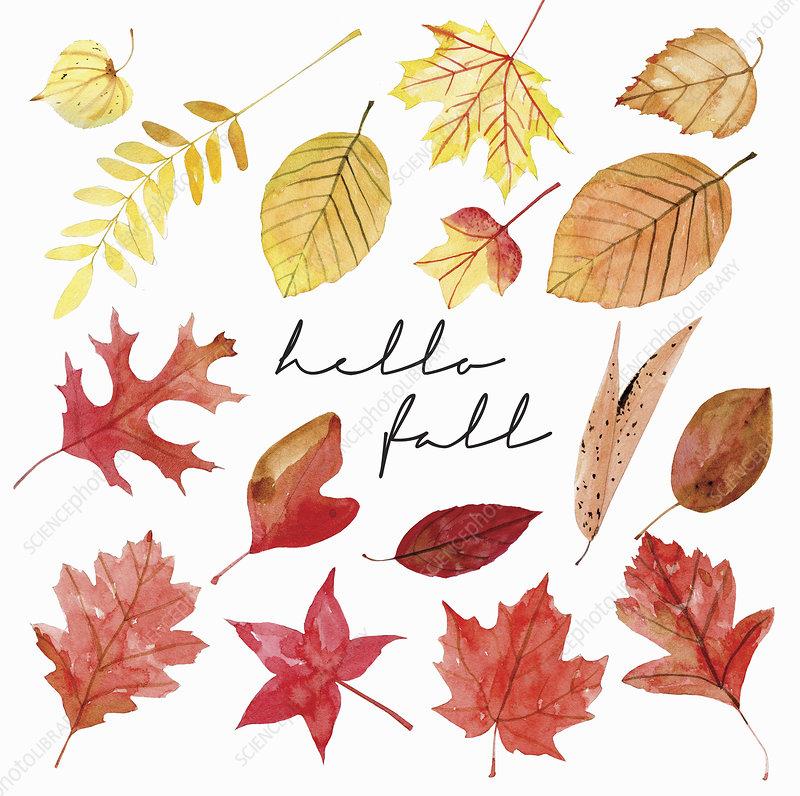 Autumn leaves, illustration