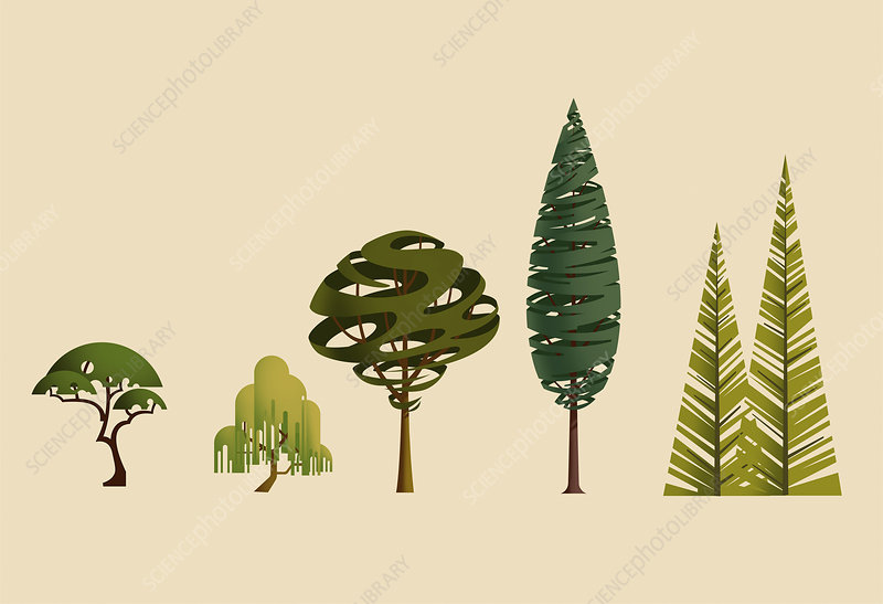 Different trees, illustration