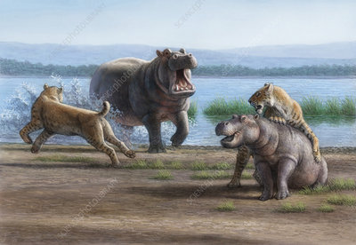 Sabretooth cats and hippopotamus prey, illustration