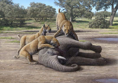 Sabretooth cats and mammoth prey, illustration