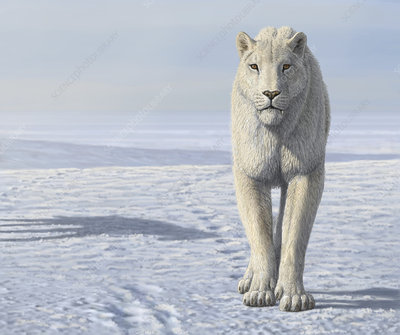 Homotherium sabretooth cat in the Arctic, illustration