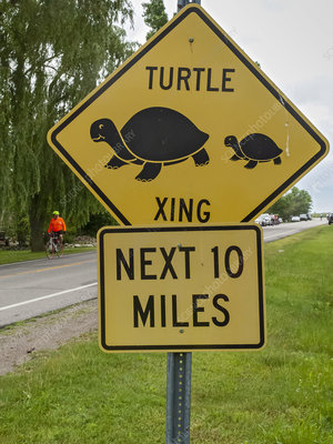 Turtle crossing sign, Michigan, USA