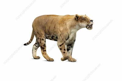 Amphimachairodus sabre-toothed cat illustration