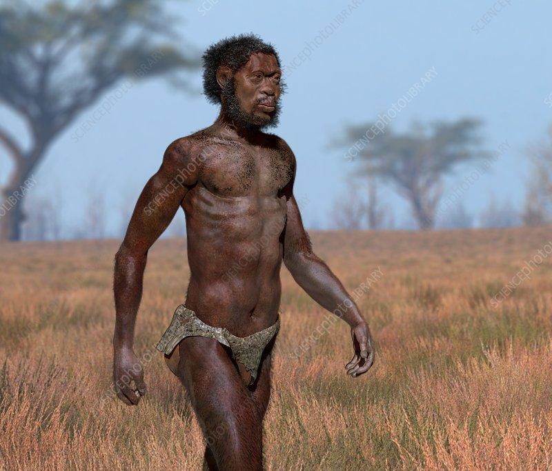 Homo Homo Sapiens