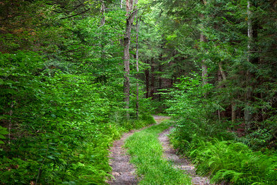 Road Through Summer Forest