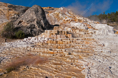 Minerva Terrace, Mammoth Hot Springs