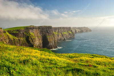 Cliffside Flowers, Cliffs Of Moher, Ireland