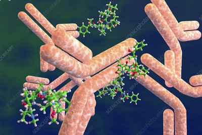 Antibody-drug conjugates, illustration