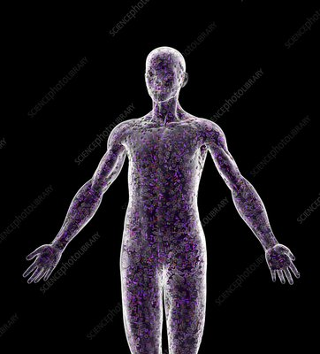 Cells in a human body, conceptual image