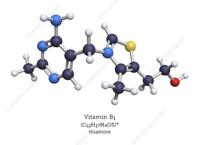 Molecular model of vitamin B1