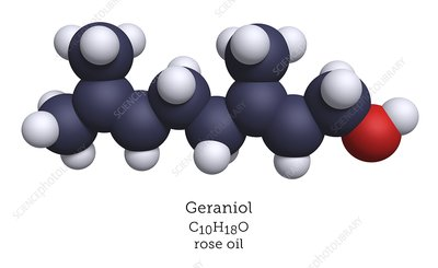 Molecular model of geraniol terpenoid