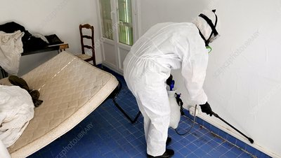 Bed bug infestation pest control