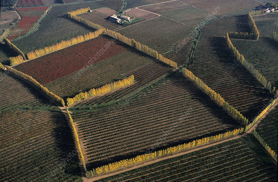 Aerial view of vineyards and fruit trees