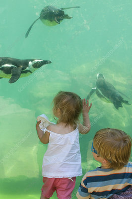 Toddlers watching Magellanic Penguins in zoo