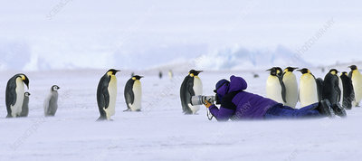Tourist photographing Emperor Penguins
