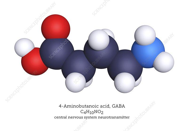 GABA neurotransmitter, molecular model