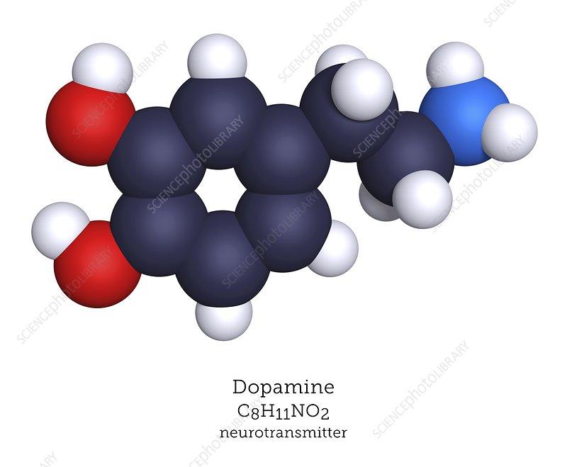 Dopamine neurotransmitter, molecular model