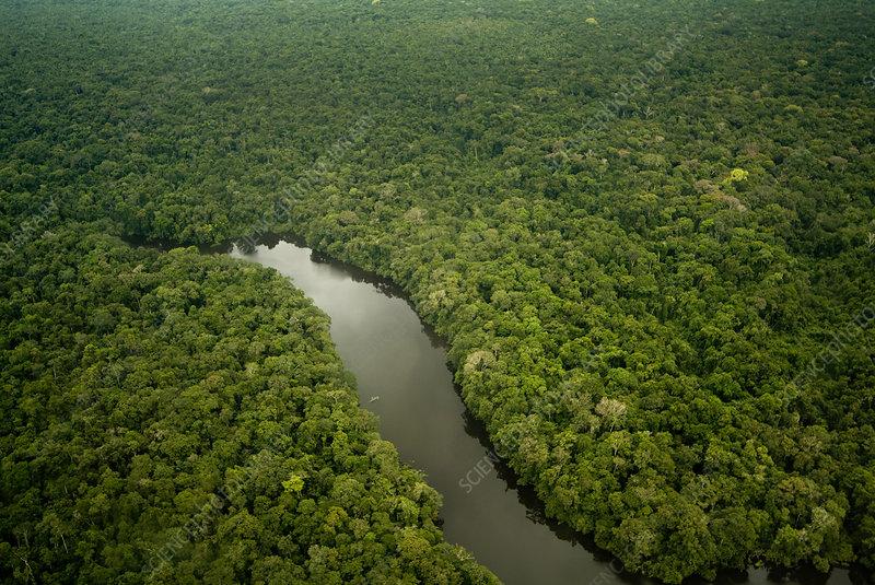 Aerial view of Lago Preto, Amazon Rainforest and lake, Peru