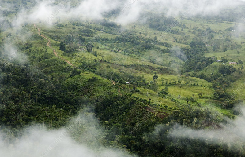 Aerial view of cloud forest cleared for pasture