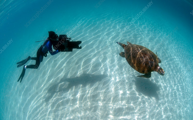 Diver filming Green turtle