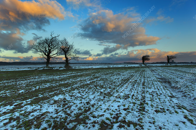 Arable fields in snow, Norfolk, UK