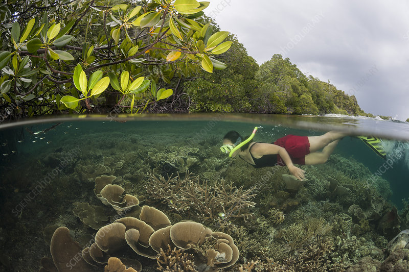 Coral reef split level with mangroves with snorkeler