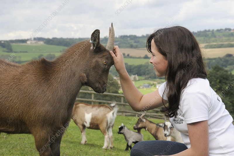 Girl stroking the head of a female Pygmy goat