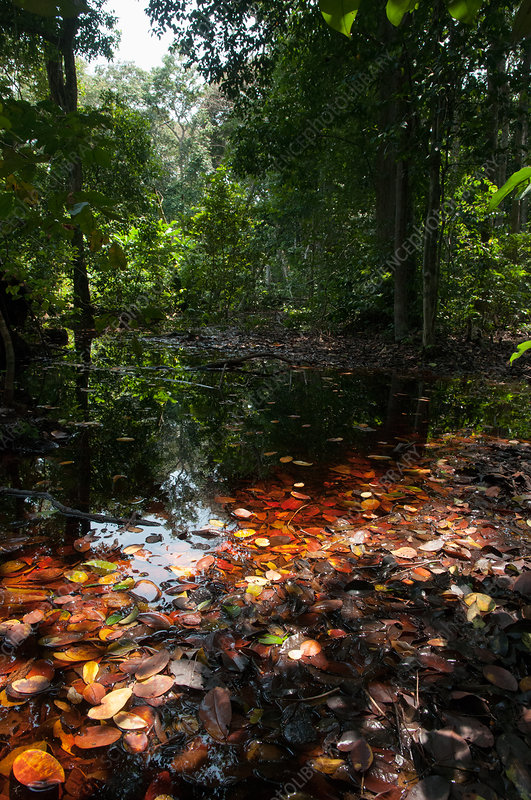Flooded forest, Loango National Park, Gabon