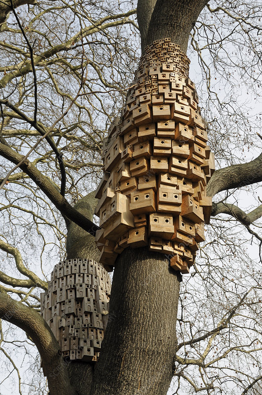 sculpture of 250 bird and bug boxes