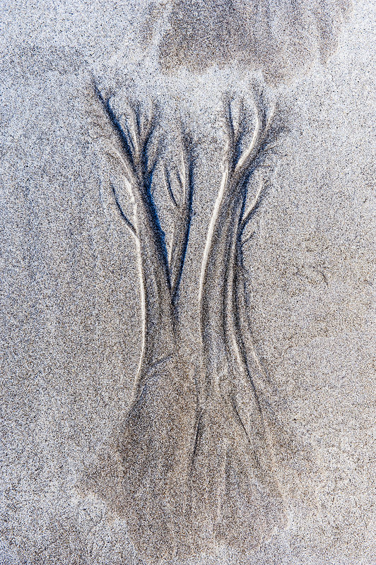 Dendritic drainage patterns eroded into sand