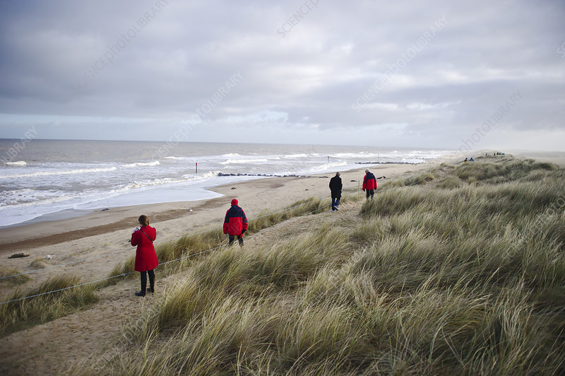 Visitors viewing Grey Seal colony at Winterton Dunes, UK