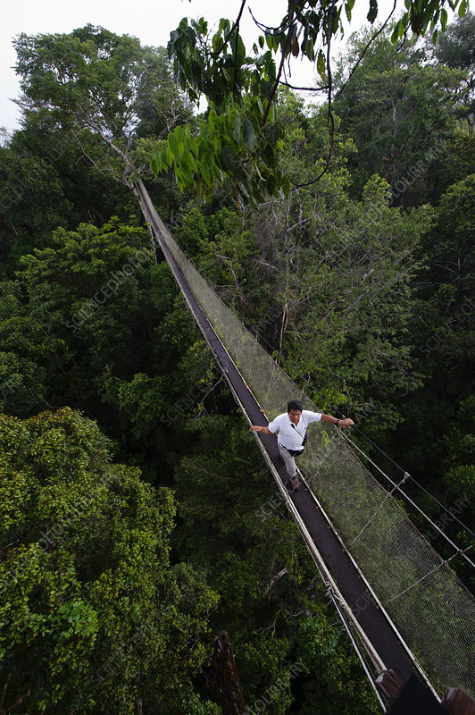 Aerial walkway through Rainforest canopy