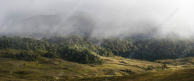 Grassland and forest at 9,000 feet, Papua New Guinea