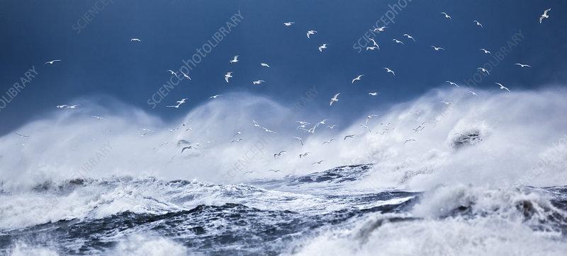 Gulls flying above stormy ocean