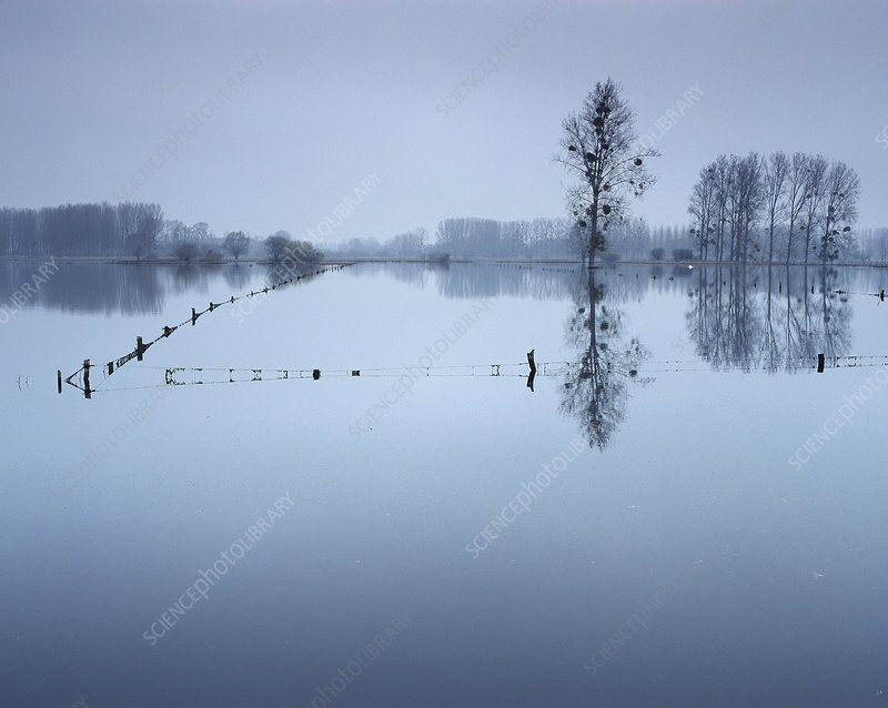 Flooded pastures, Chauny, Oise region, Picardy, France