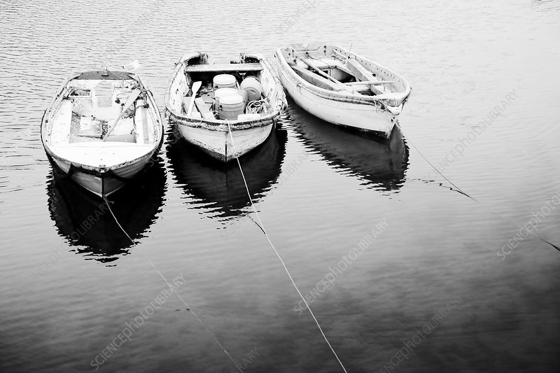 Three punts, Mevagissey, Cornwall, UK