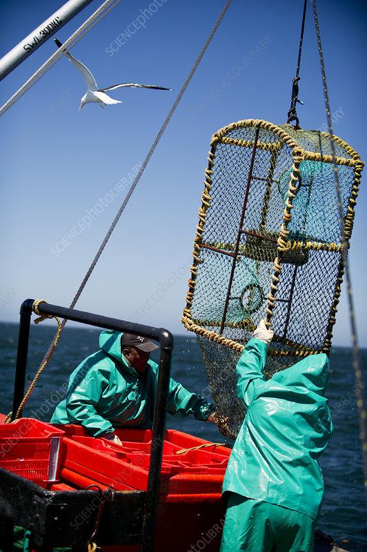 Fishermen pulling up a lobster trap