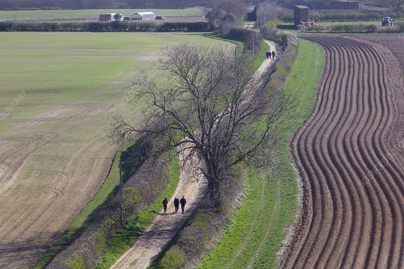 Footpath through farmland, Norfolk, UK