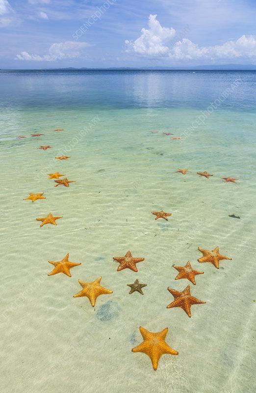 Starfish Beach, Panama