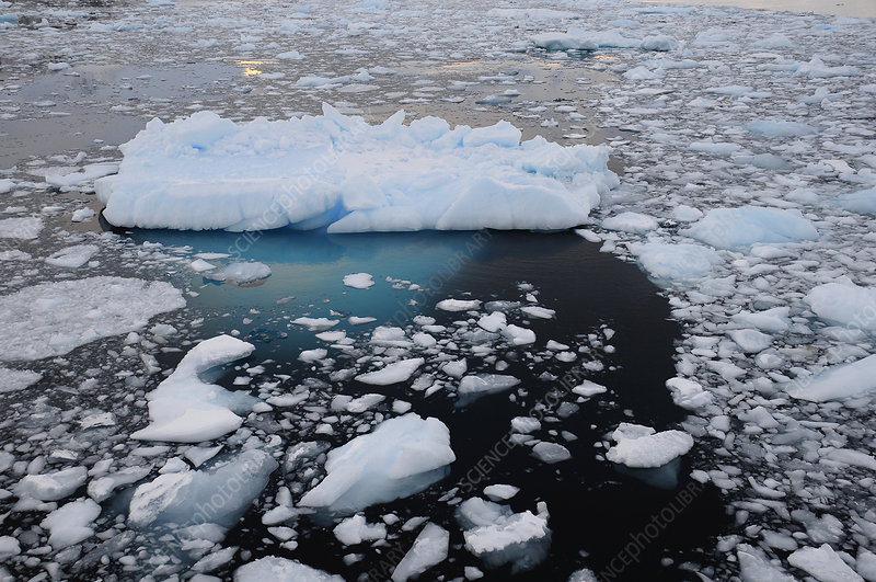 Sea ice and small iceberg, Antarctic Peninsula, Antarctica