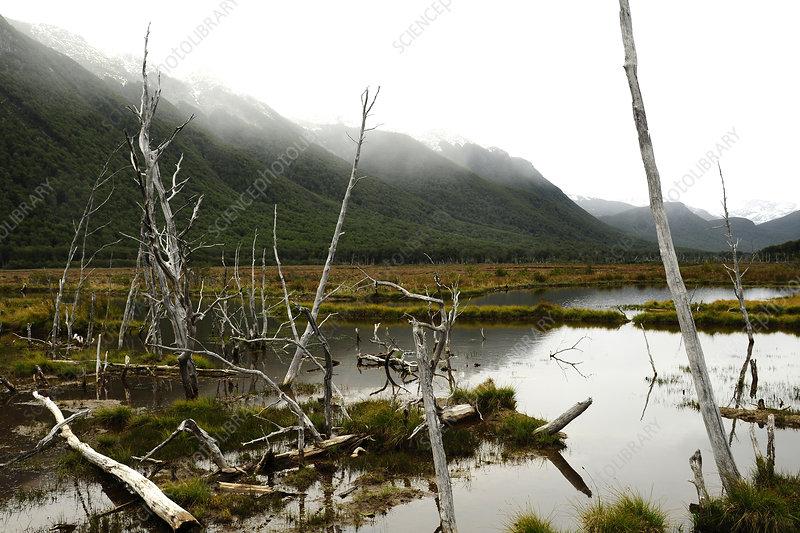 Peatland landscape in the mist, Tierra del Fuego, Argentina