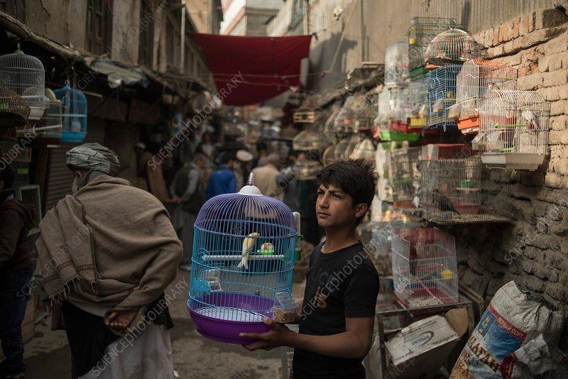 Kabul bird market, Afghanistan
