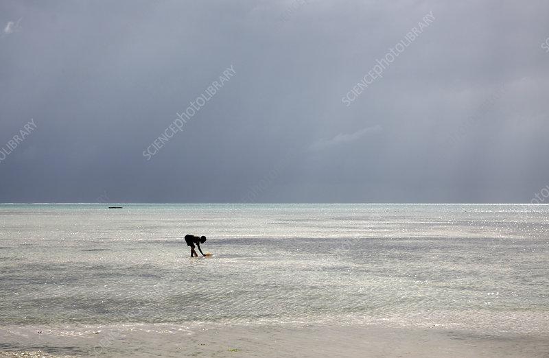 Boy collecting sea water on a beach, Zanzibar