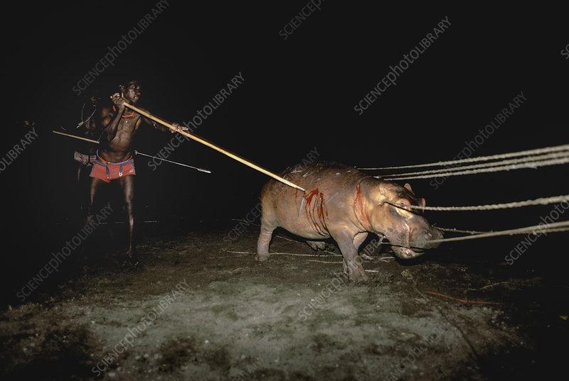 El Molo hunters hunting hippopotamus, Kenya