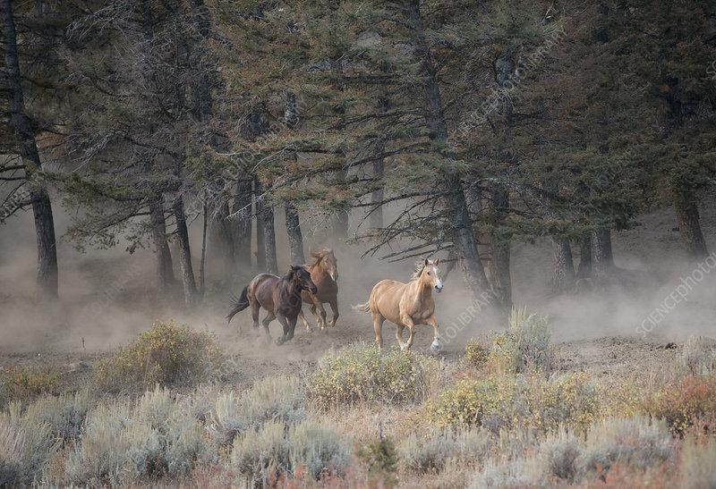 Horses near woodland in ranch, Montana, USA