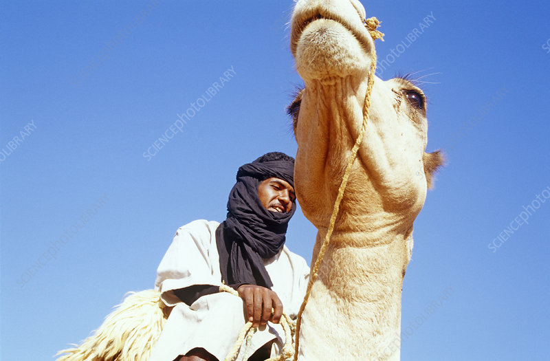 Local man riding camel, central Mauritania, 2004